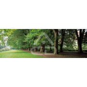 Painel Panorâmico Parede Caminho no Parque
