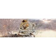 Painel Panorâmico Parede Leopardo
