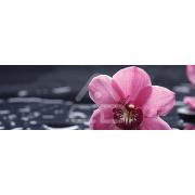Painel Panorâmico Parede Orquídea Rosa